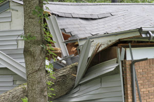 Close up of an oak tree fallen into and totaling a small house, buckling the roof and destroying the siding