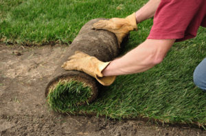 Unrolling Sod for a New Lawn